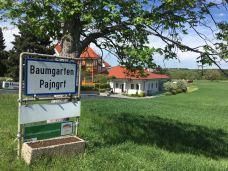 Heuriger Reiff in Baumgarten